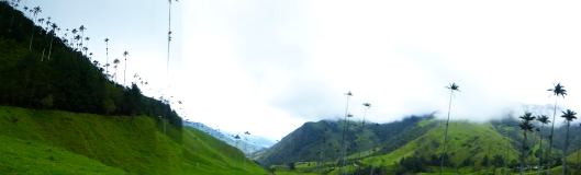 Vallée de Cocora